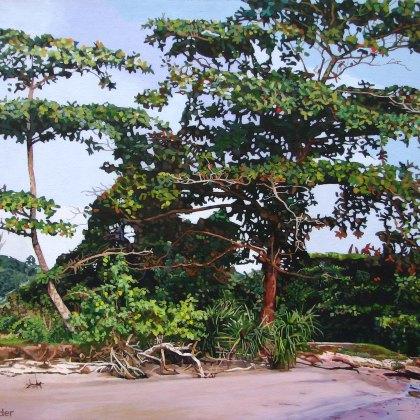Sarawak Coastline